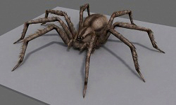 Wolf spider model. 3D Studio Max render using Fur/Hair modifier.