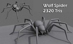 Wolf spider model untextured and wireframe views.